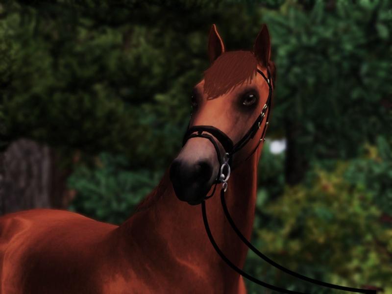 Galerie de valou   chevaux//sims  Screen22
