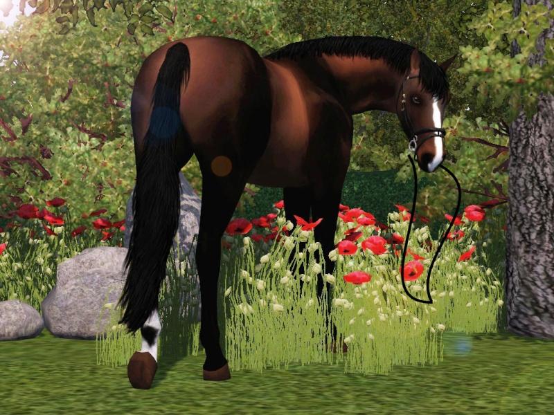 Galerie de valou   chevaux//sims  Screen23