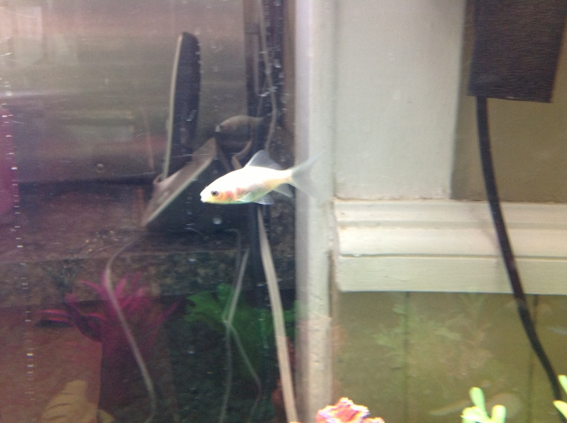 Some Pictures of the goldfish 1110