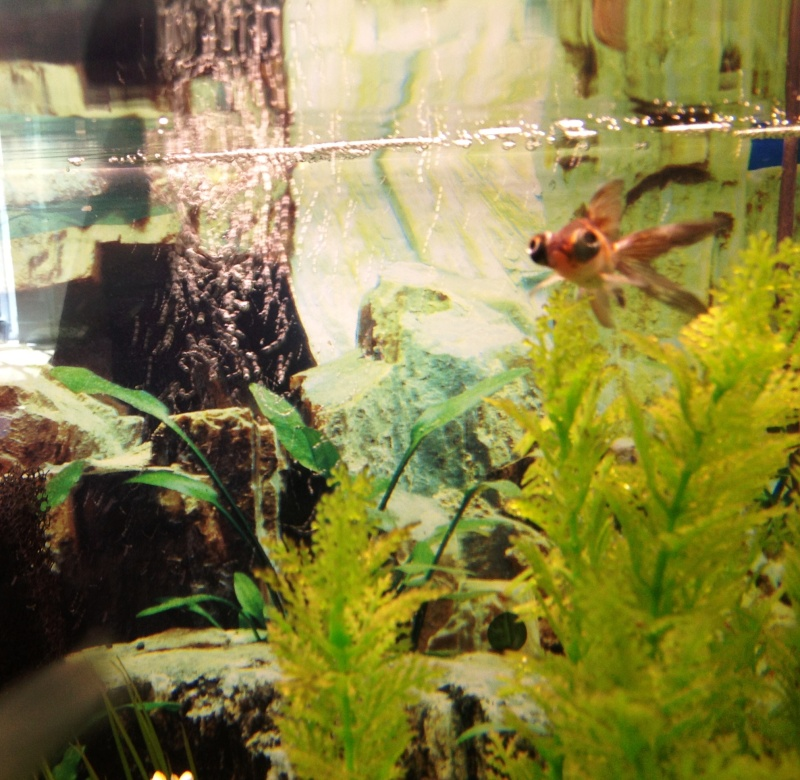 Some Pictures of the goldfish 210