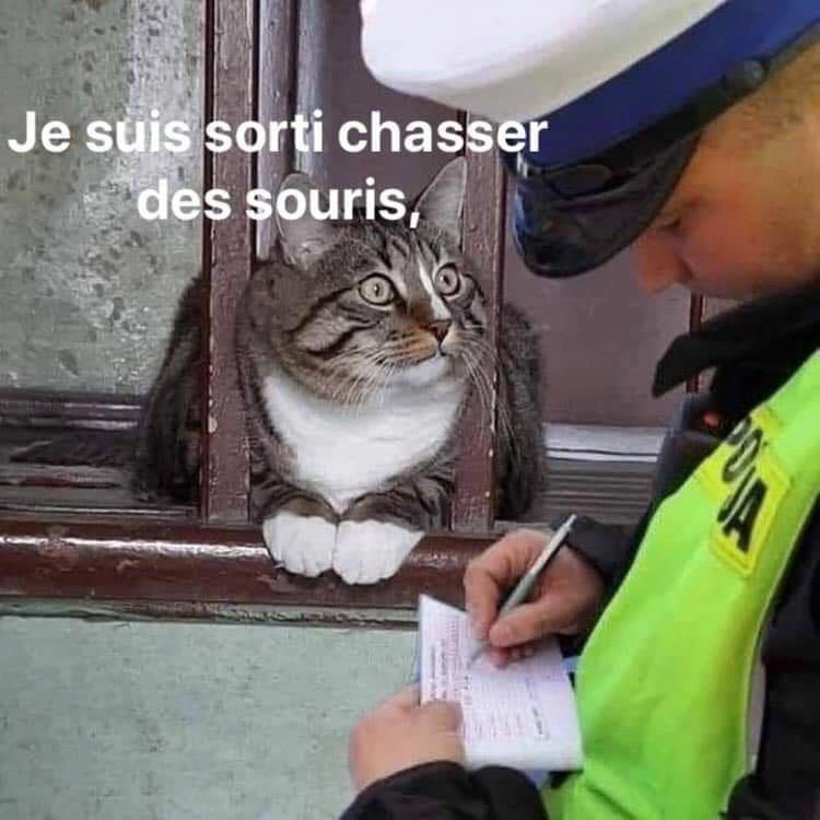 Un peu d'humour ! - Page 3 Chatpr10