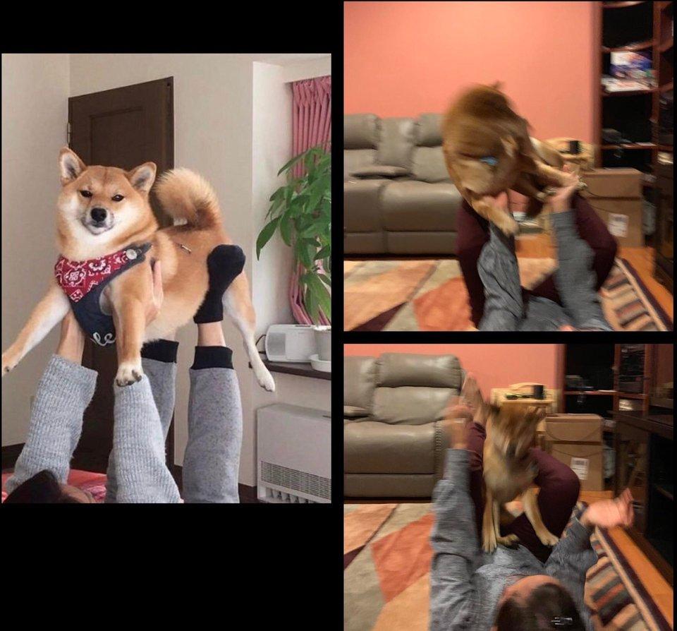 看到別人和狗拍照的照片,於是我也想要試一試…… Cg4mme10