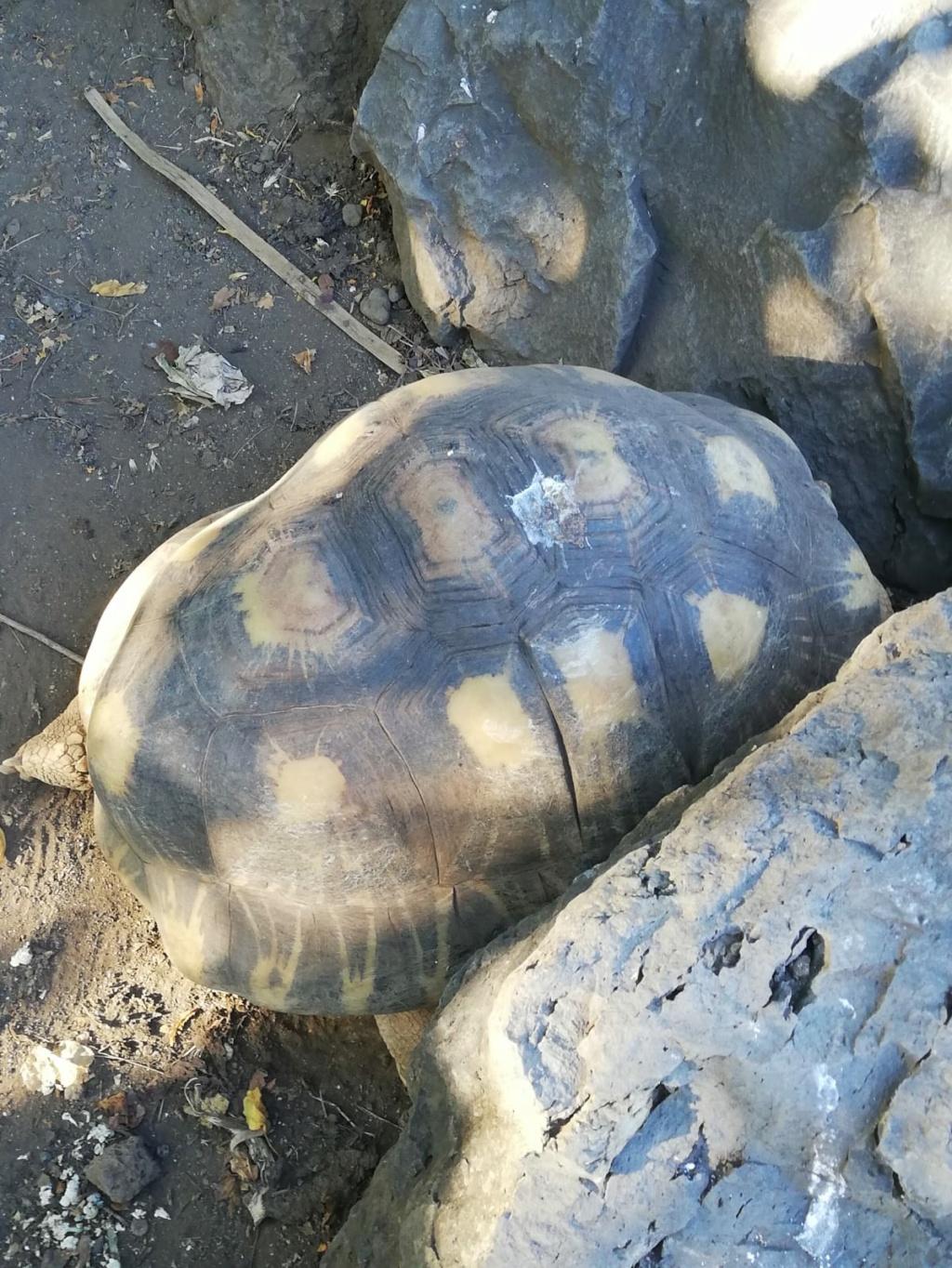 Identifications tortues radiées de Madagascar ? Img-2021