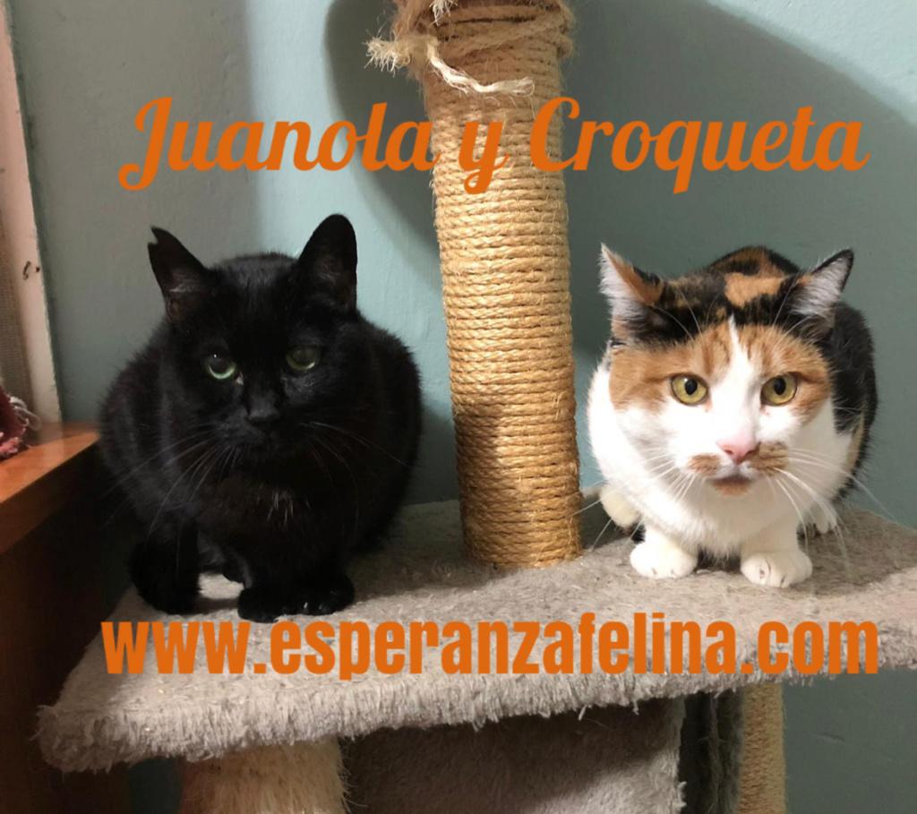 Croqueta y Juanola, preciosas abuelitas buscan hogar. Alava (FN: 02/08/2006; 14/06/2006) 110