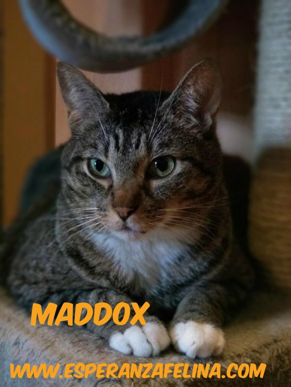 Maddox - Superviviente de la perrera en adopción (Alava, F.N 25/01/10) 15448610