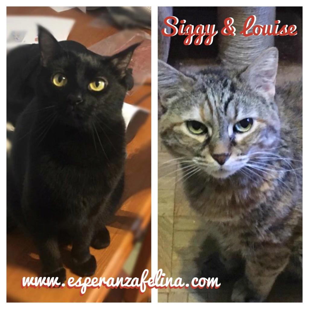 SIGGY Y LOUISE, en adopción. Álava (F.N. aprox: 22/07/2015 y 1/1/2011) 15621710