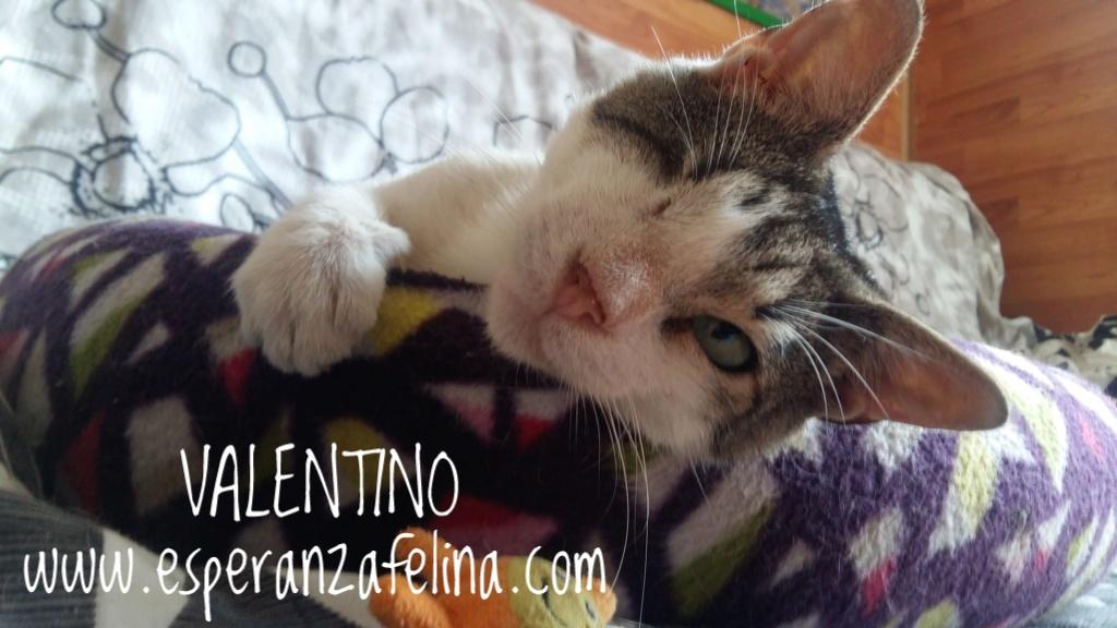 Valentino, gatito muy especial busca hogar. +INMUNO. Álava (F.N aprox. 14/11/2012) 20180710
