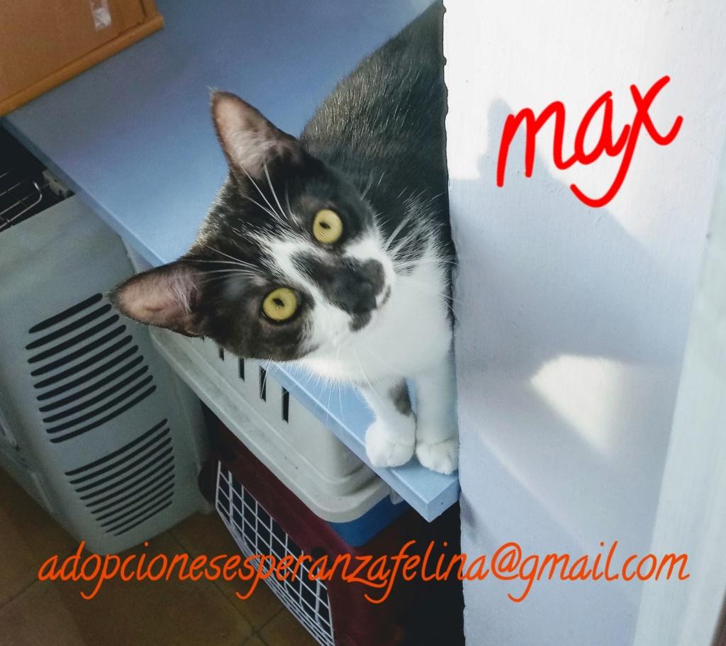Max en adopción. Álava, España (f.n aprox 08/05/2019) 20200211