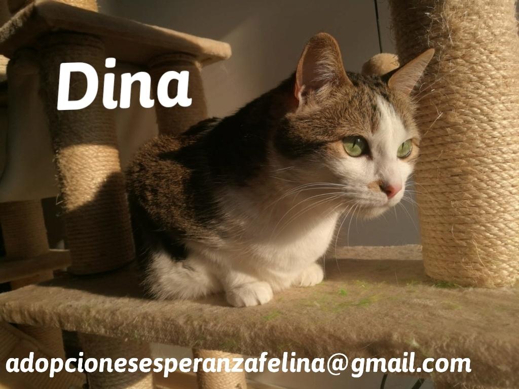Dina, preciosa gata busca su hogar (Álava, fecha de nacimiento aproximada 10/04/2014 ) - Página 2 20200511