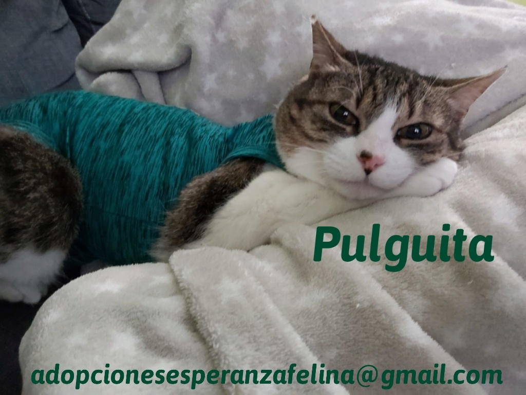 Pulguita, preciosa y mimosa gatita busca hogar. (F.N: 15/05/2012) (Positiva a inmuno + Leucemia) Álava. - Página 2 20200513