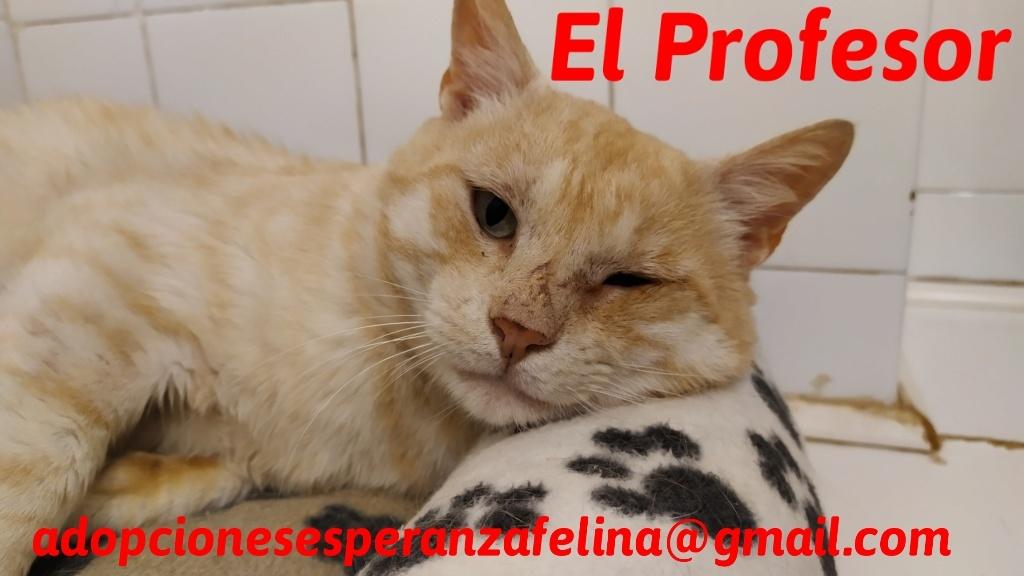 El Profesor en adopción (F.N aprox 01/05/2016. Álava, España) (Positivo a inmuno)  20200610