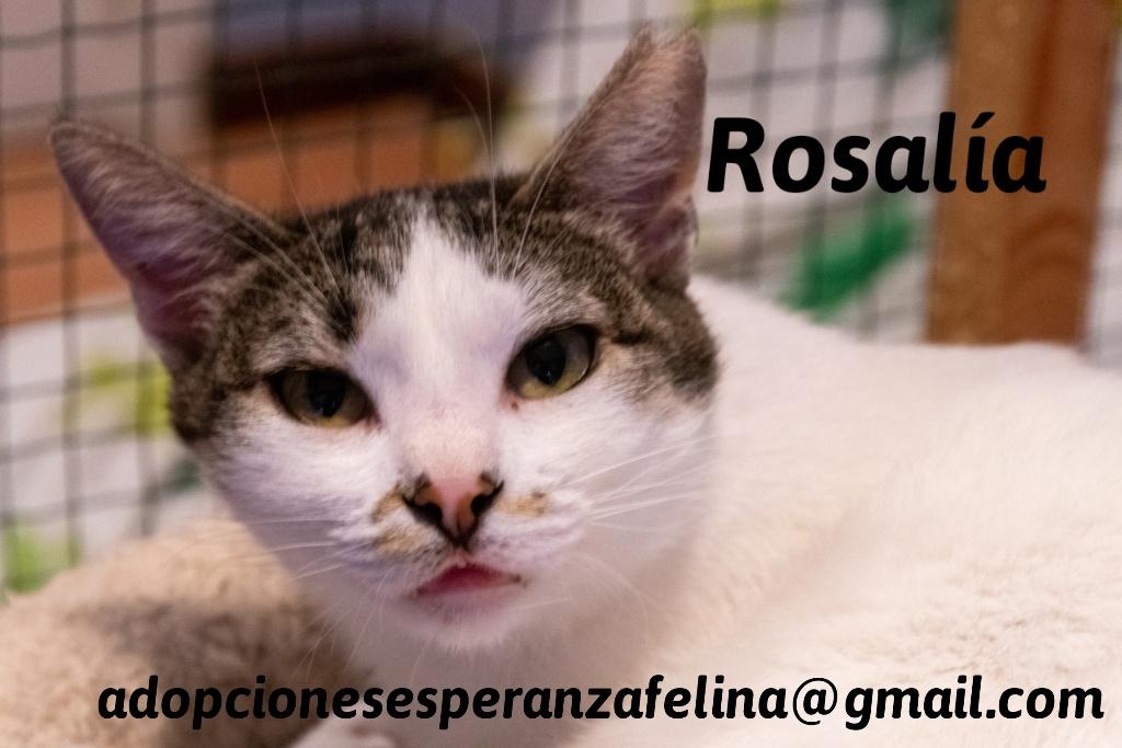 Rosalía, preciosa gatita en adopción. Álava-España (F.N: 01/2017) 20200612
