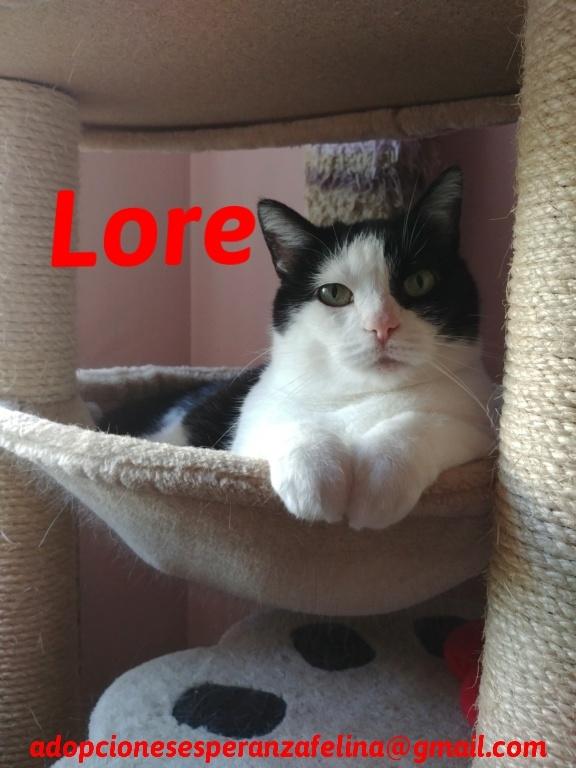 Lore, preciosa vaquita luchadora en adopción (Álava, F.N aprox. 2/04/12) - Página 2 20200710