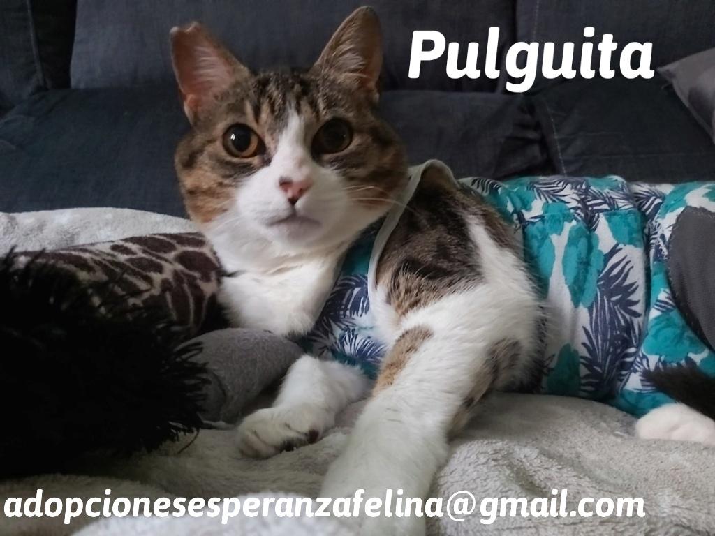 Pulguita, preciosa y mimosa gatita busca hogar. (F.N: 15/05/2012) (Positiva a inmuno + Leucemia) Álava. - Página 2 20200711