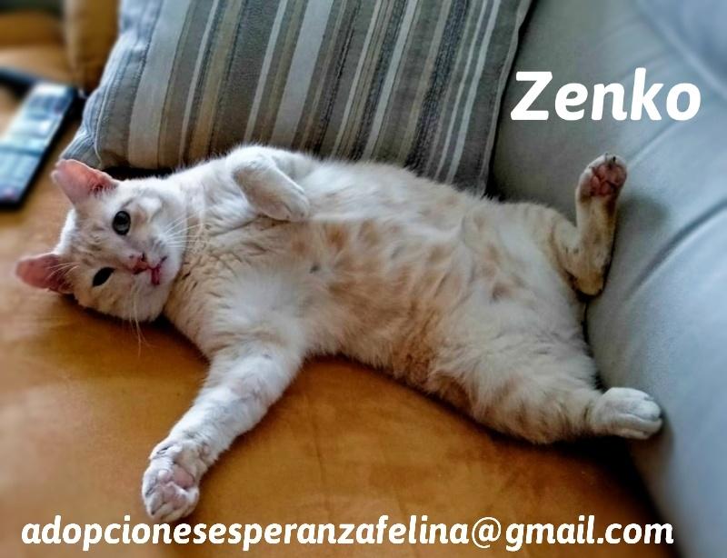 Zenko, precioso rubio en adopción. (F.N aprox: 15/01/2013) (Positivo a inmuno) Álava. - Página 2 20200712
