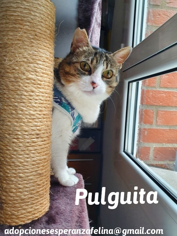 Pulguita, preciosa y mimosa gatita busca hogar. (F.N: 15/05/2012) (Positiva a inmuno + Leucemia) Álava. - Página 2 20200912