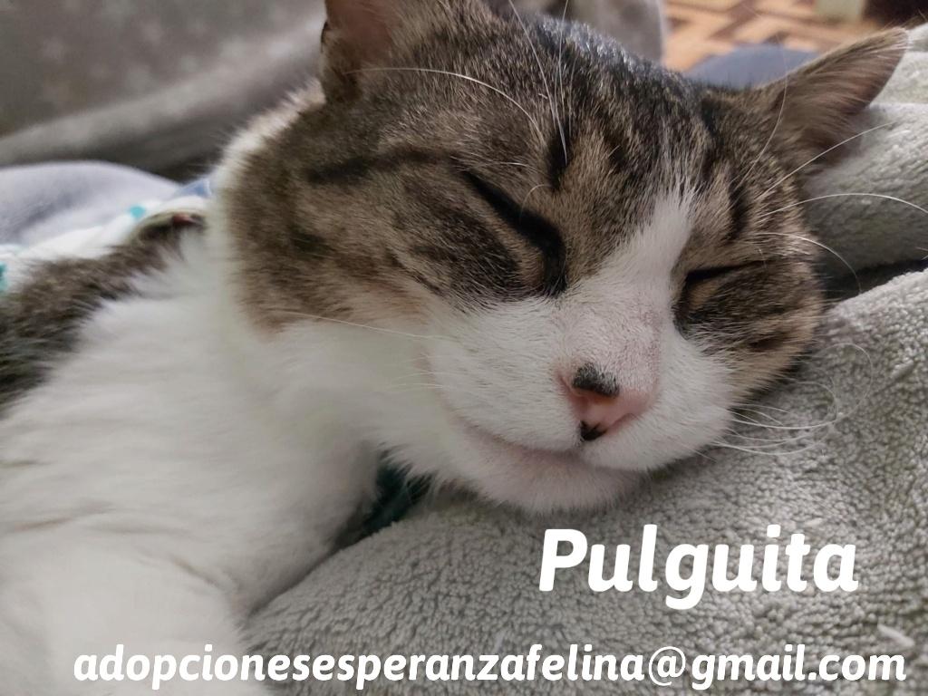 Pulguita, preciosa y mimosa gatita busca hogar. (F.N: 15/05/2012) (Positiva a inmuno + Leucemia) Álava. - Página 2 20201010