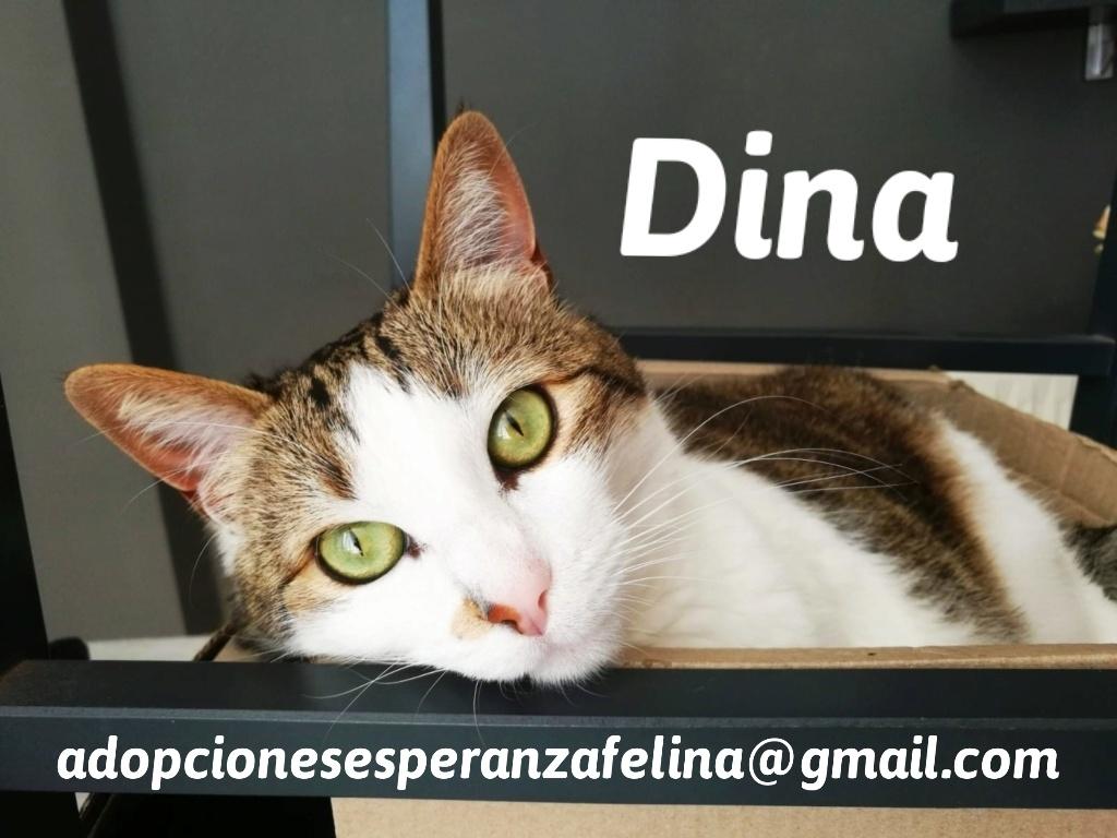 Dina, preciosa gata busca su hogar (Álava, fecha de nacimiento aproximada 10/04/2014 ) - Página 2 20201011