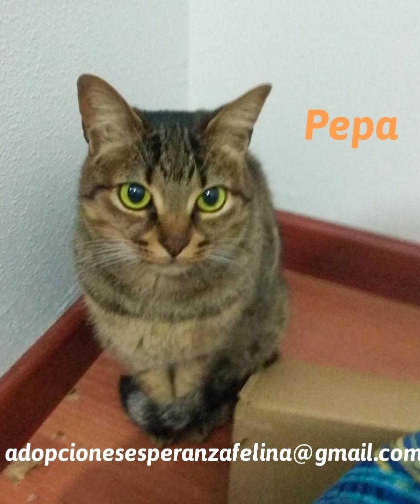 Pepa,preciosa gatita necesita hogar (f.n.aprox 28/04/13) 20201012