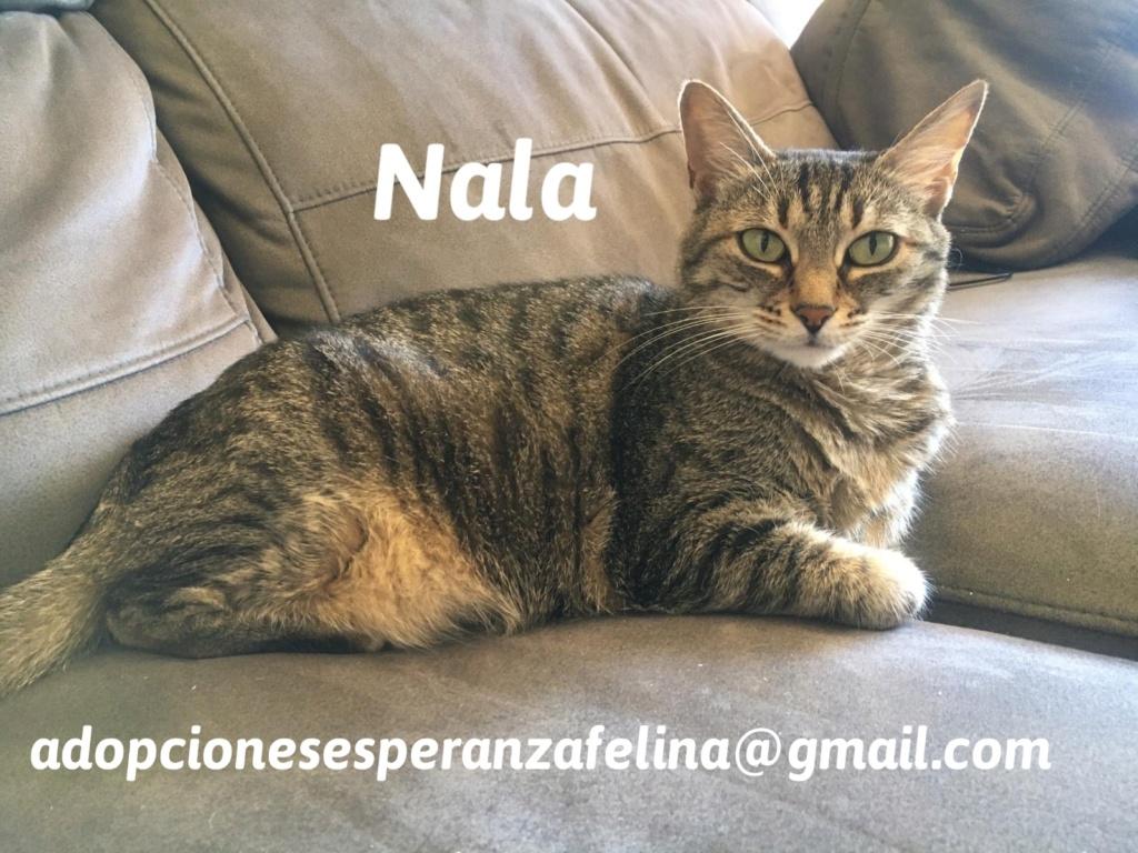 Nala en adopción. Álava-Españana (F.N. aprox. 28/04/11) 20201014