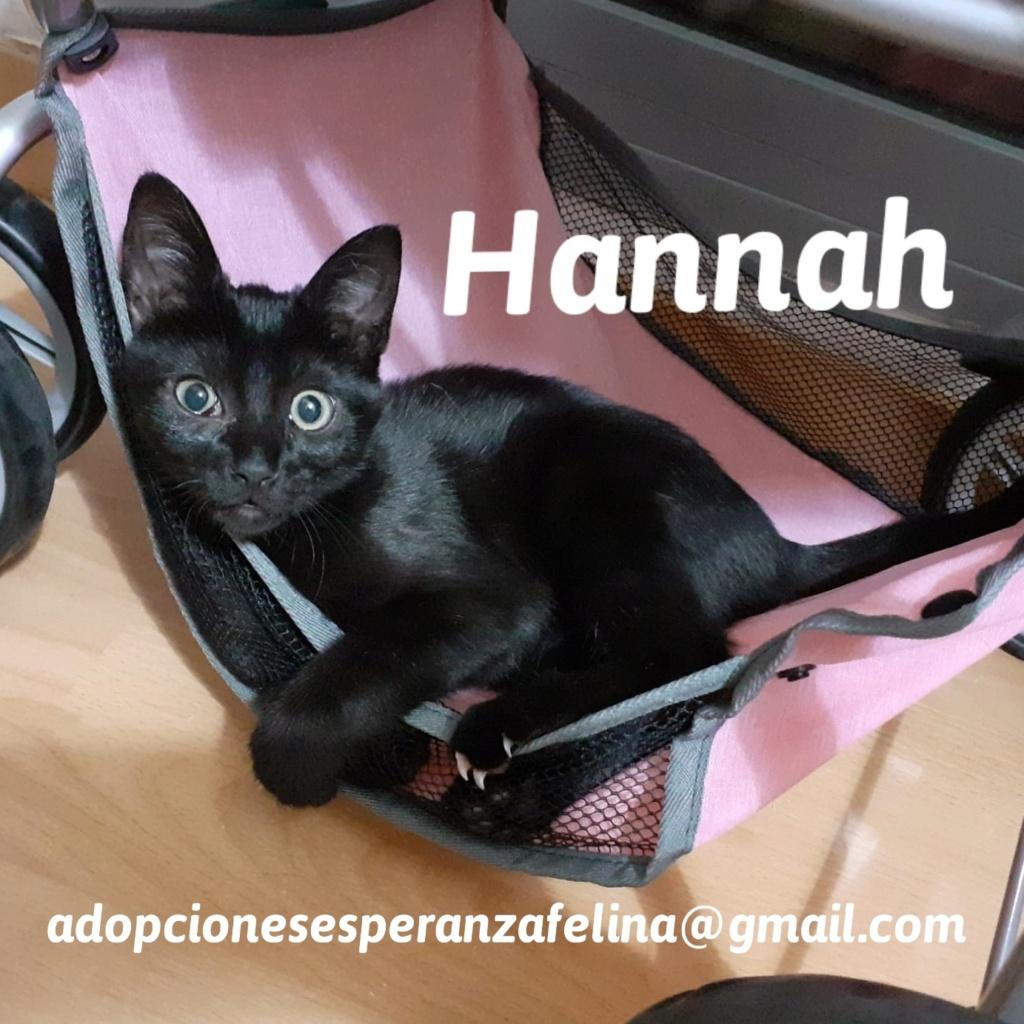 Hannah, preciosa gatita (F.N Aprox: 24/07/2020) 20201110