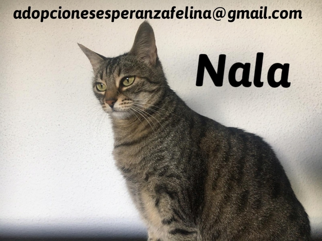 Nala en adopción. Álava-Españana (F.N. aprox. 28/04/11) 20201111