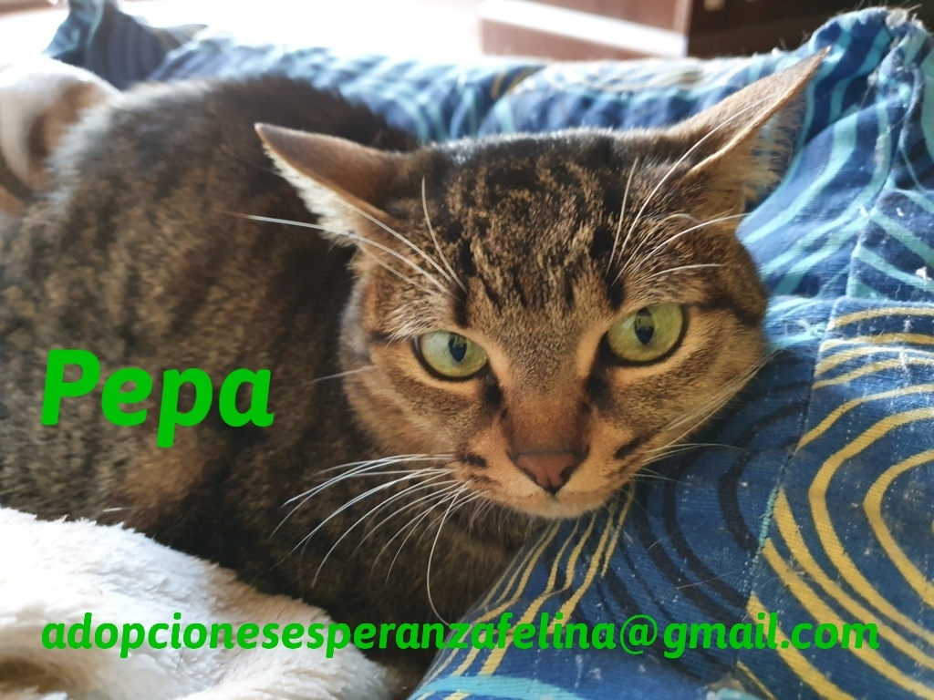 Pepa,preciosa gatita necesita hogar (f.n.aprox 28/04/13) - Página 2 20201211