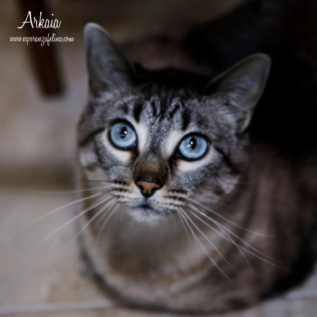 ARKAIA, gatita rescatada en la zona de Arkaiate (F.N. aprox: 1/01/2016) Álava _mg_2111