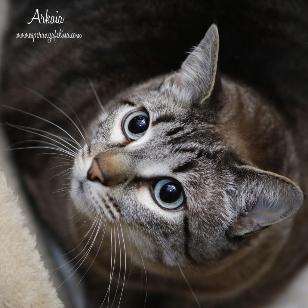 ARKAIA, gatita rescatada en la zona de Arkaiate (F.N. aprox: 1/01/2016) Álava _mg_5110