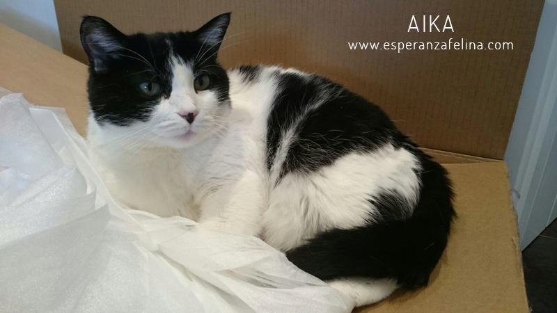 Aika, preciosa vaquita en adopción. (F.N: 01/01/12) Álava. Aika_011