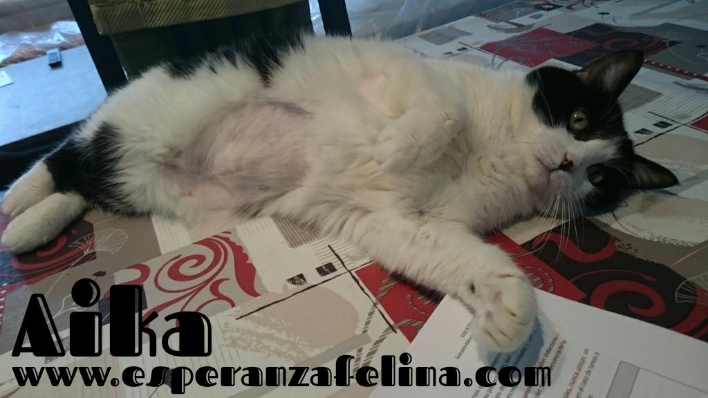 Aika, preciosa vaquita en adopción. (F.N: 01/01/12) Álava. Aika_e12