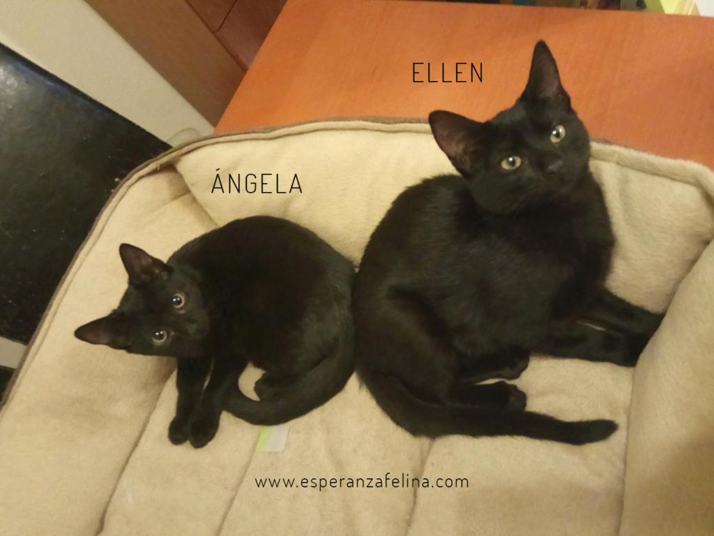 Angela y Ellen. Cachorritas en adopción (Alava, F.N 17/06/2018) Angela10