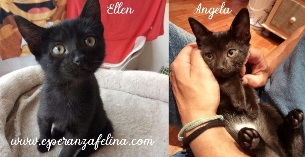 Angela y Ellen. Cachorritas en adopción (Alava, F.N 17/06/2018) Angela11
