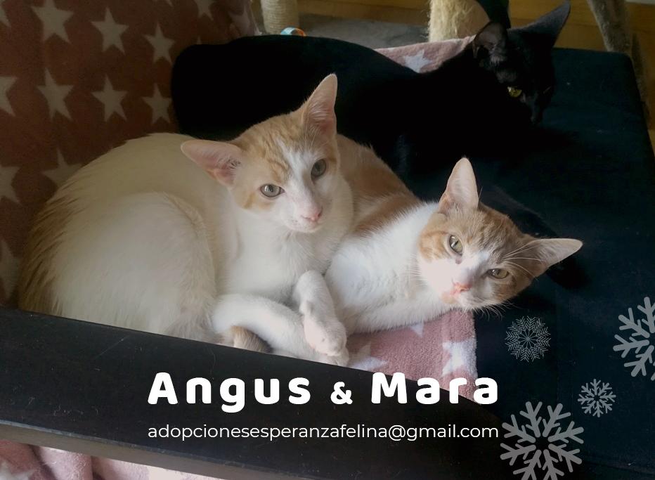 Mara y Angus, hermanitos divertidos buscan familia (Alava-España f.n.aprox 08/04/19) Angus_10