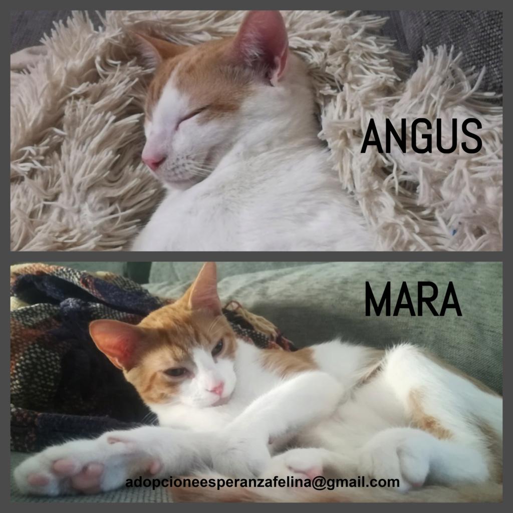 Mara y Angus, hermanitos divertidos buscan familia (Alava-España f.n.aprox 08/04/19) Angus_11