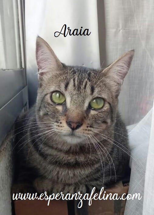 Araia y Pepper, preciosas gatitas buscan hogar. Alava (Fec. Nac. Aprox. 14/04/2018) Araia_11
