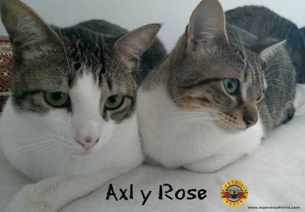 Axl Rose, parejita adorable busca hogar (Alava) (fec. nac. 14/07/2017) Axl_y_10