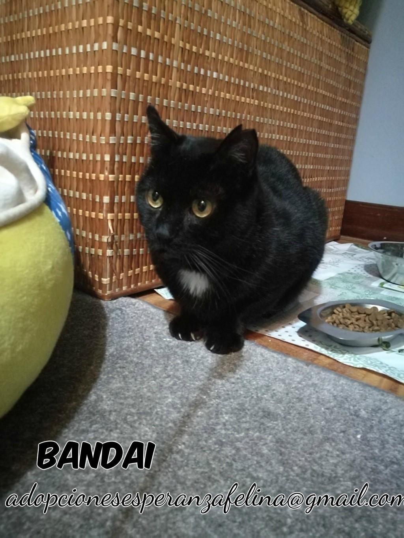 Bandai, precioso negruchi busca hogar. (F.N Aprox: 16/07/15) Bandai11