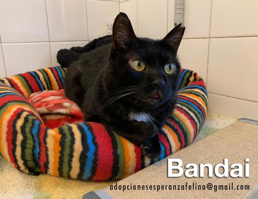 Bandai, precioso negruchi busca hogar. (F.N Aprox: 16/07/15) Bandai12