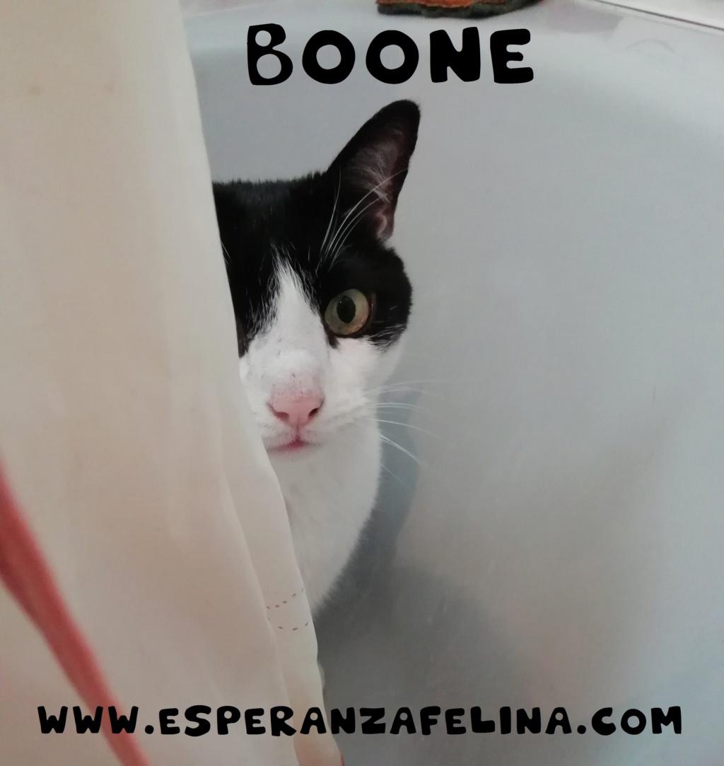 Boone, vaquito jugueton busca hogar. Alava (FN:10/02/10) Boone_14