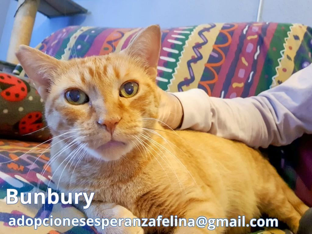 Bunbury, rubiazo en adopción. (Álava, F.N 01/01/14) Bunbur11
