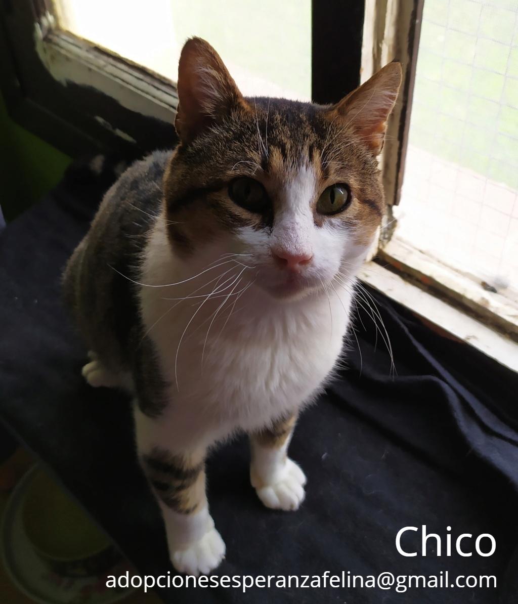 Chico en adopción. Álava-ESP (F.N. aprox. 2006. +Inmuno y Leucemia) Chico_10
