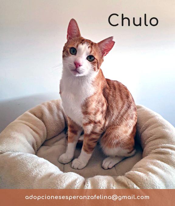 Chulo busca hogar. Álava-España (F.N.aprox 01/11/2019) Chulo_11