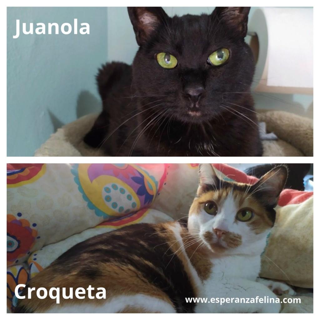 Croqueta y Juanola, preciosas abuelitas buscan hogar. Alava (FN: 02/08/2006; 14/06/2006) Croque11