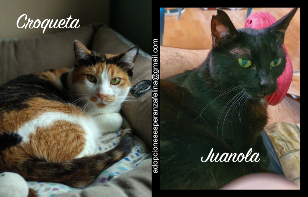 Croqueta y Juanola, preciosas abuelitas buscan hogar. Alava (FN: 02/08/2006; 14/06/2006) Croque12