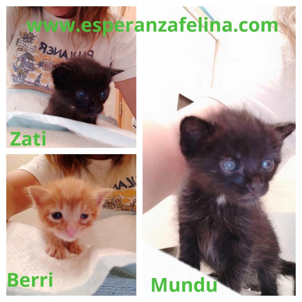 Berri, Zati y Mundu, los cucarachitas (f.nac.aprox.: 27/06/2019. Álava) Cucara10