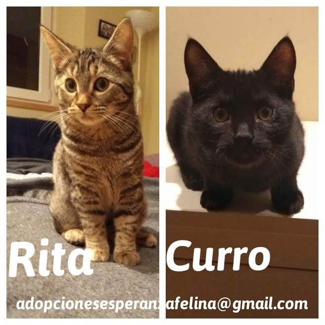 Rita y Curro, cachorritos en adopción. Álava-España (F.N. aprox. 15/07/2020) Curro10