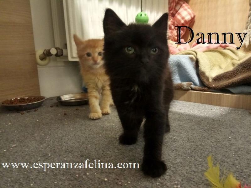 Danny, precioso negrutxi en adopcción, Álava (F.N: 14/05/2018) Danny_10