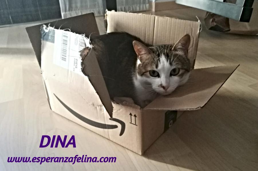 Dina, preciosa gata busca su hogar (Álava, fecha de nacimiento aproximada 10/04/2014 ) Dina_e13