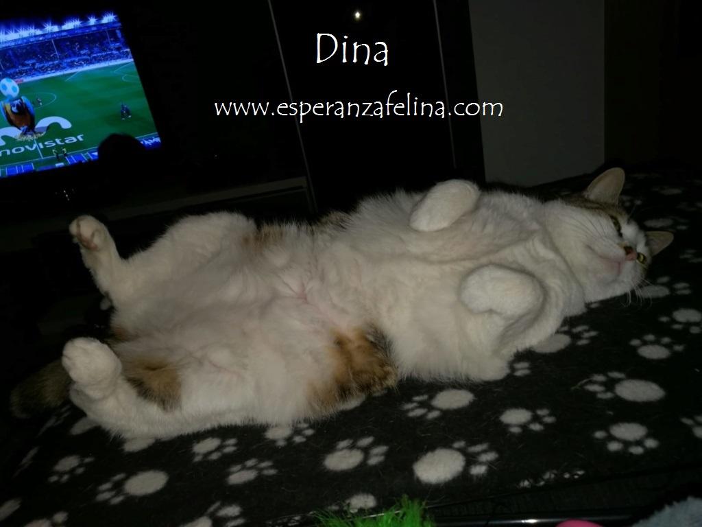 Dina, preciosa gata busca su hogar (Álava, fecha de nacimiento aproximada 10/04/2014 ) Dina_e14